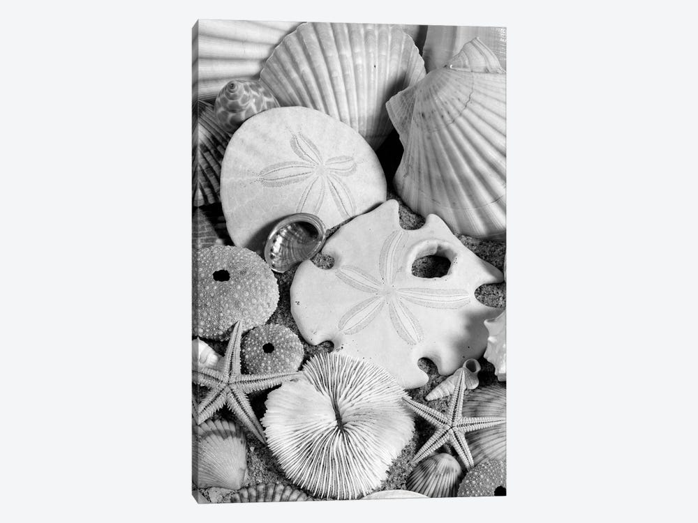 1980s Assortment Of Seashells Sand Dollars Coral And Starfish On Sand by Vintage Images 1-piece Canvas Artwork