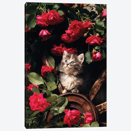 1980s Blue Calico Longhaired Kitten 3-Piece Canvas #VTG598} by Vintage Images Canvas Art