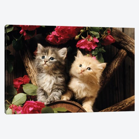 1980s Two Kittens Climbing On Wagon Wheel Amid Wild Red Roses Canvas Print #VTG605} by Vintage Images Art Print