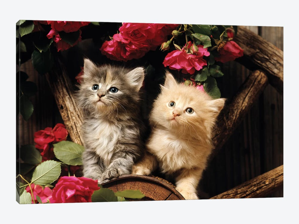 1980s Two Kittens Climbing On Wagon Wheel Amid Wild Red Roses by Vintage Images 1-piece Canvas Print