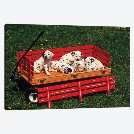 1990s Six Cute Dalmatian Puppy Dogs In Red Wagon Canvas Print #VTG608} by Vintage Images Canvas Artwork