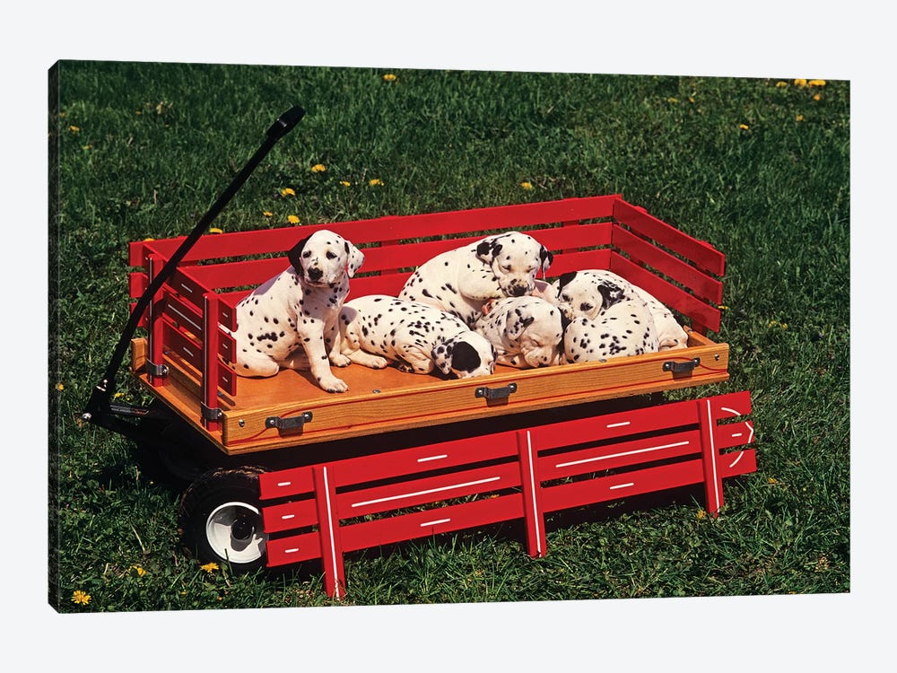 1990s Six Cute Dalmatian Puppy Dogs In Red Wagon by Vintage Images 1-piece Canvas Wall Art