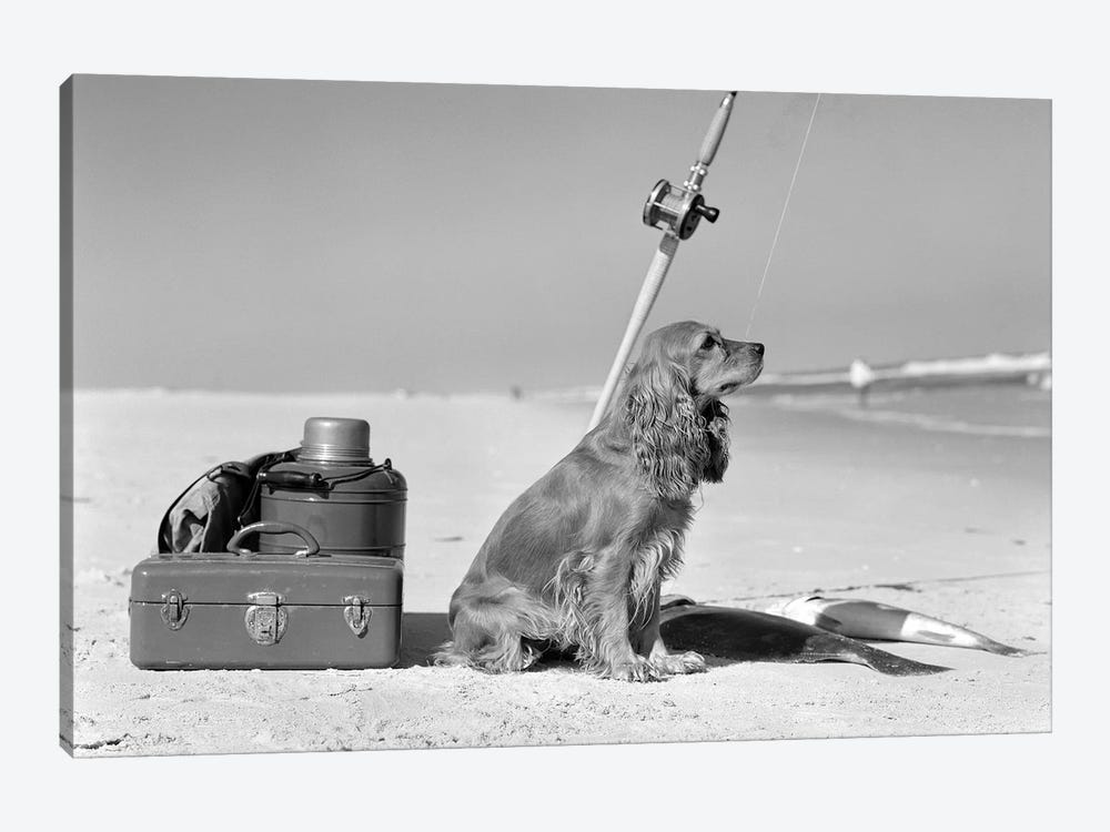 Cocker Spaniel Dog Standing Guard Over Two Caught Fish And Fishing Equipment by Vintage Images 1-piece Art Print