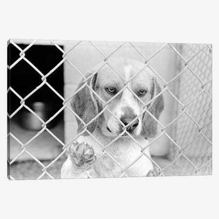 Sad Beagle Dog Looking Through Chain Link Pound Fence Canvas Print #VTG639} by Vintage Images Art Print
