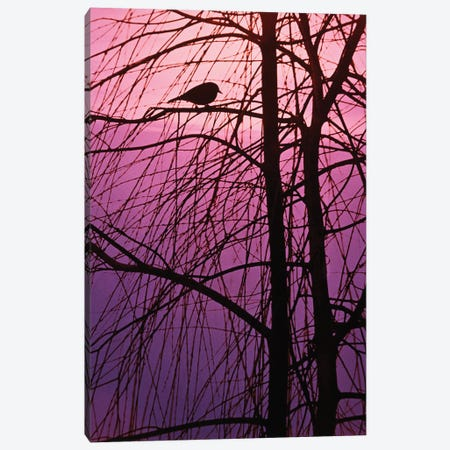 1980s Bird Silhouette In Tree Branches Canvas Print #VTG726} by Vintage Images Canvas Art
