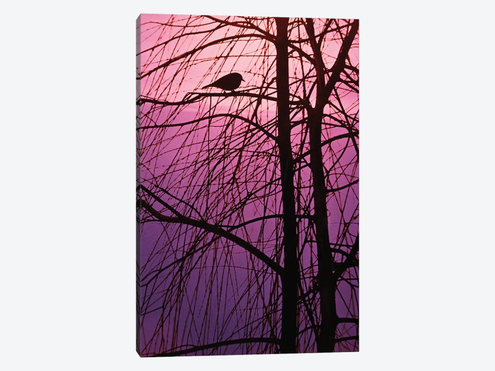 1980s Bird Silhouette In Tree Branches by Vintage Images 1-piece Art Print