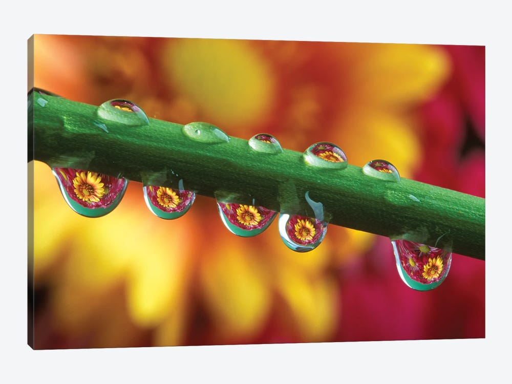 Water Droplets On Flower Stem Reflecting View Of Flowers In Background by Vintage Images 1-piece Canvas Wall Art