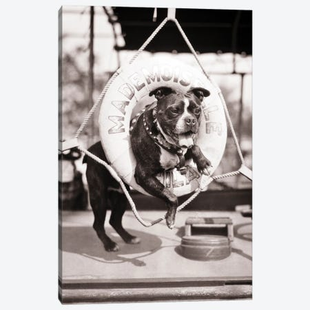 1920s 1930s Old Sea Dog Boston Terrier Sticking Head And Shoulders Through Life Preserver On Sailboat Canvas Print #VTG737} by Vintage Images Art Print