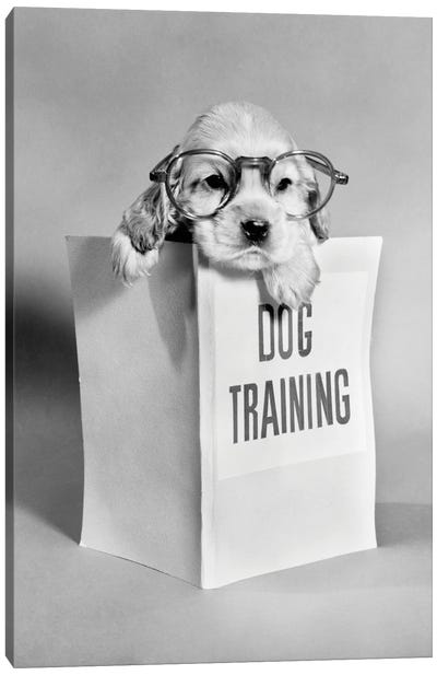 1950s Cocker Spaniel Puppy Wearing Glasses With Paws Over Dog Training Manual Canvas Art Print
