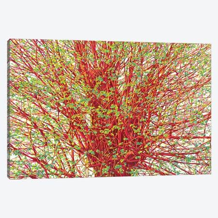 Spring Willow Canvas Print #VTK133} by Vitali Komarov Canvas Art