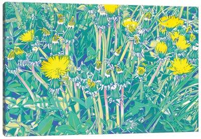 Dandelions In A Meadow Canvas Art Print
