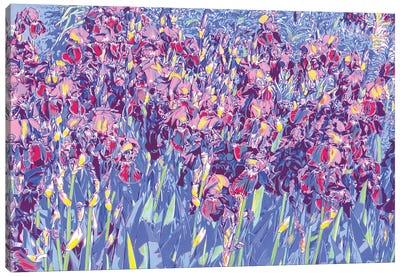 Iris Flowers In A Field Canvas Art Print