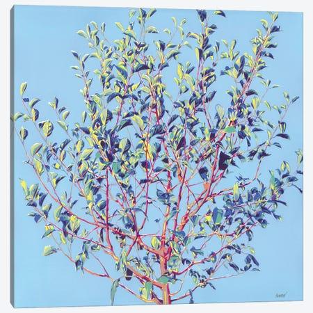 Spring Tree Canvas Print #VTK157} by Vitali Komarov Art Print
