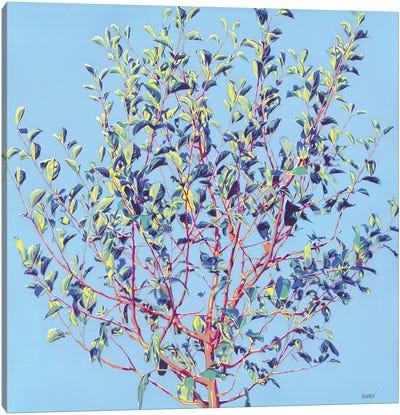 Spring Tree Canvas Art Print