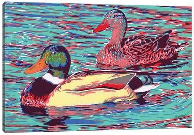 Mallard Duck Couple Canvas Art Print