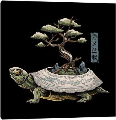 The Legendary Kame Canvas Art Print