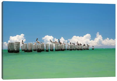 Gull Conference Canvas Art Print