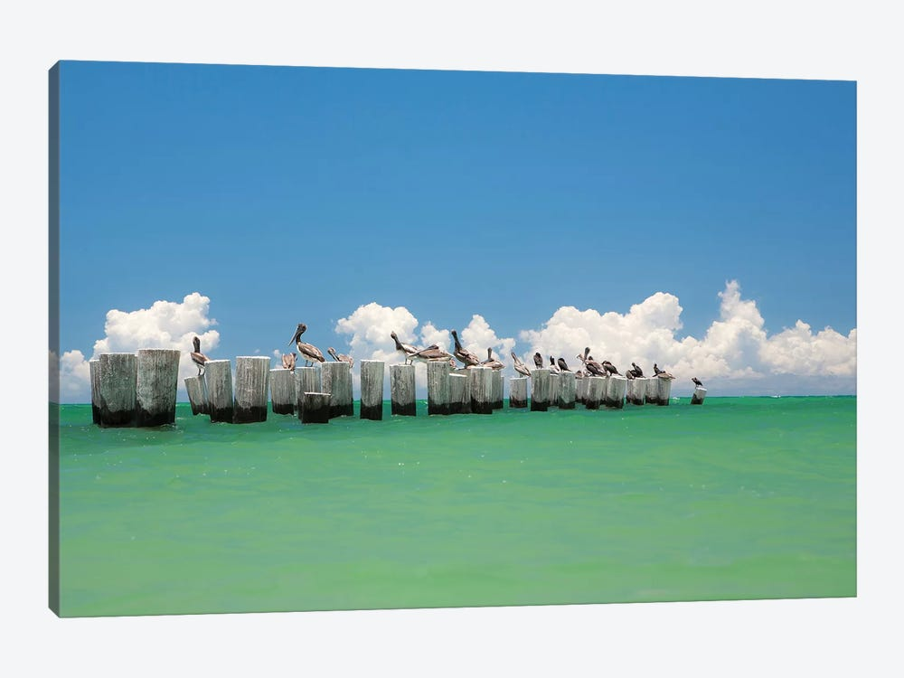 Gull Conference by Verne Varona 1-piece Canvas Artwork