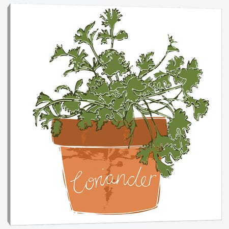 Coriander Canvas Print #VYO18} by Vicky Yorke Canvas Art