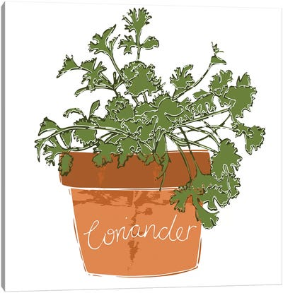 Coriander Canvas Art Print