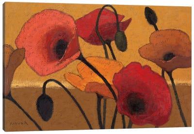 Poppy Curry III Canvas Print #WAC1164