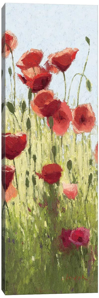 Mountain Poppies I Canvas Art Print