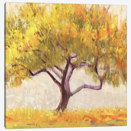 Apricot Tree  Canvas Print #WAC1200} by Shirley Novak Art Print