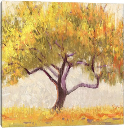 Apricot Tree Canvas Art Print