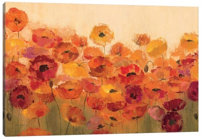 Summer Poppies  Canvas Print #WAC1404