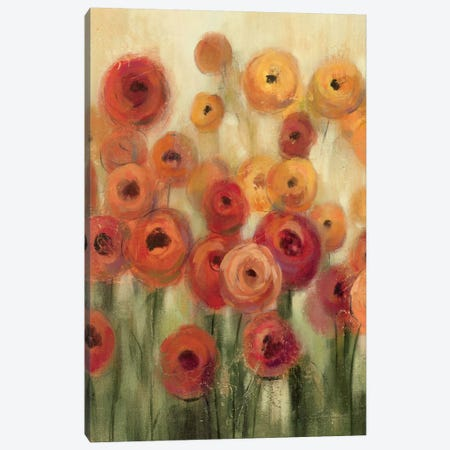 Ranunculi Field II  Canvas Print #WAC1435} by Silvia Vassileva Canvas Art Print