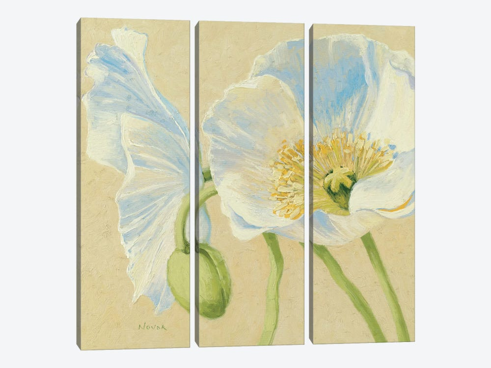 White Poppies II by Wild Apple Portfolio 3-piece Canvas Print