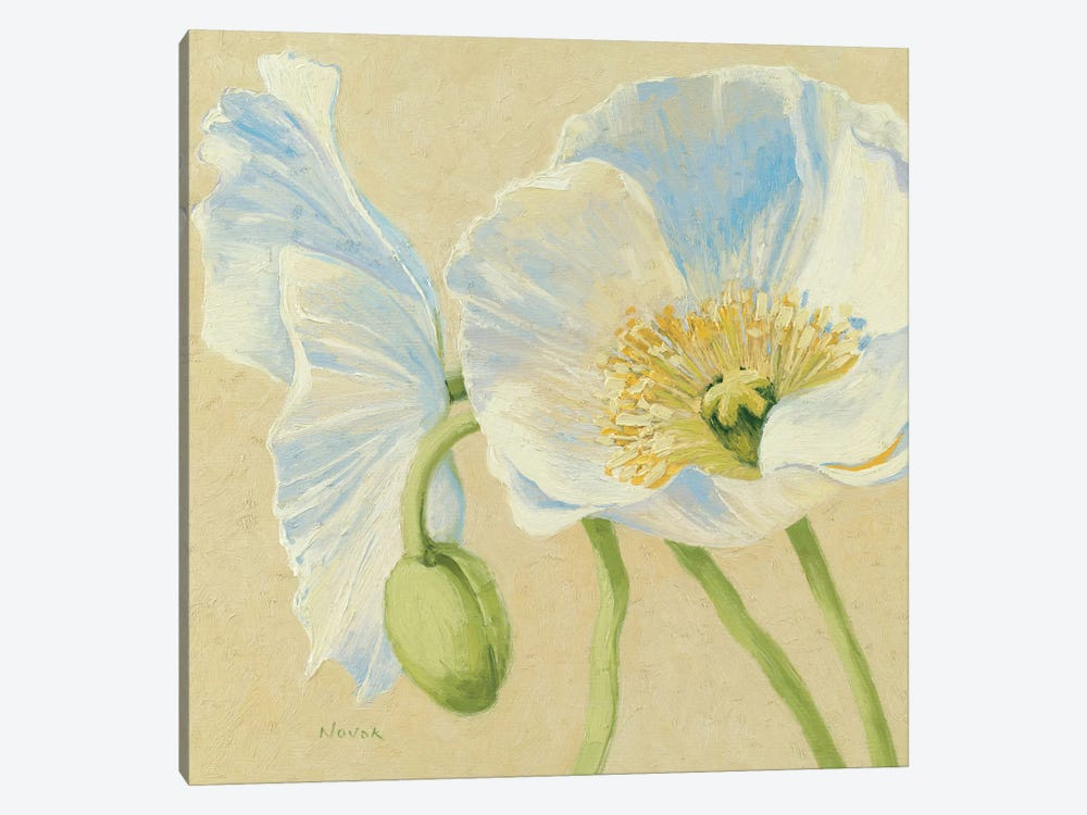White Poppies II by Wild Apple Portfolio 1-piece Canvas Print