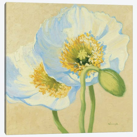 White Poppies III Canvas Print #WAC1602} by Wild Apple Portfolio Canvas Art Print