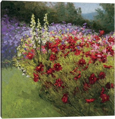 46 Cosmos Garden I Canvas Art Print