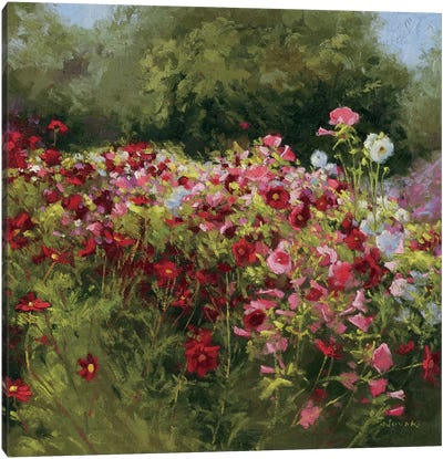 46 Cosmos Garden II Canvas Art Print