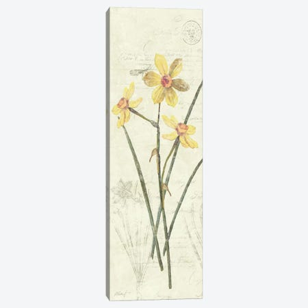 Daffodil Panel Canvas Print #WAC1614} by Wild Apple Portfolio Art Print