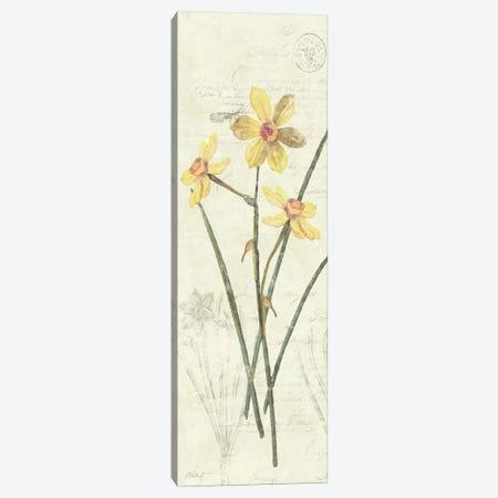 Daffodil Panel Canvas Print #WAC1614} by Wild Apple Portfolio Art Print
