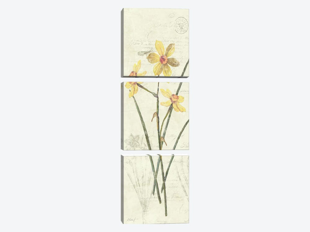 Daffodil Panel by Wild Apple Portfolio 3-piece Art Print