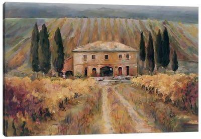 Toscana Vigna Canvas Print #WAC1615