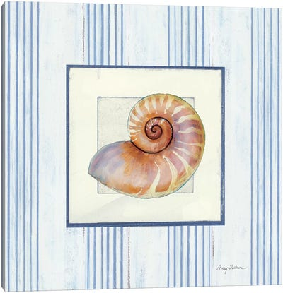 Sanibel Shell III Canvas Art Print