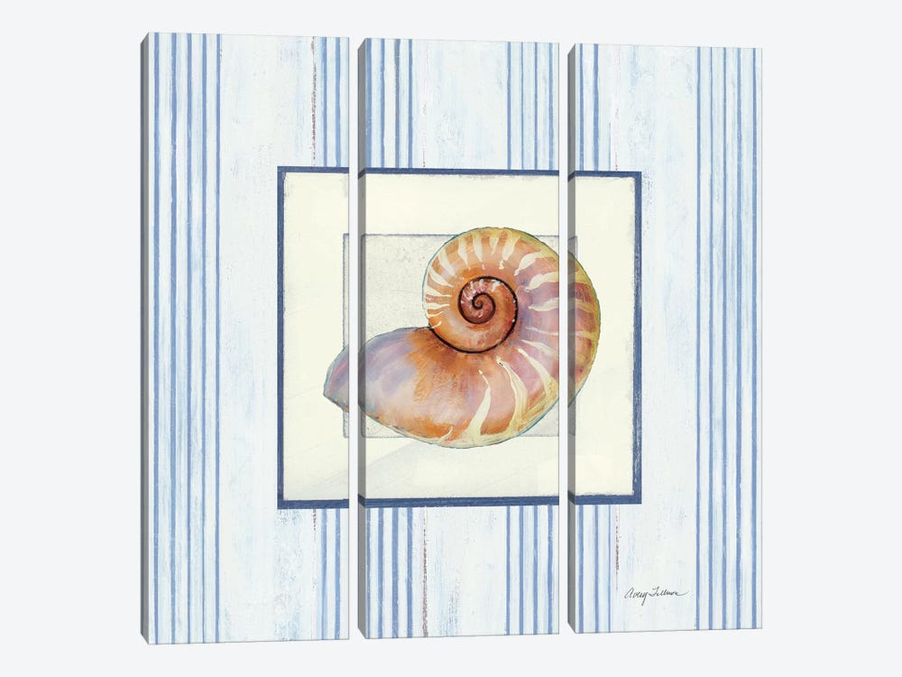 Sanibel Shell III by Wild Apple Portfolio 3-piece Canvas Art