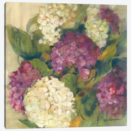 Hydrangea Delight I Canvas Print #WAC1646} by Carol Rowan Canvas Art