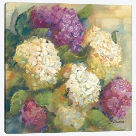 Hydrangea Delight II Canvas Print #WAC1647} by Carol Rowan Canvas Artwork