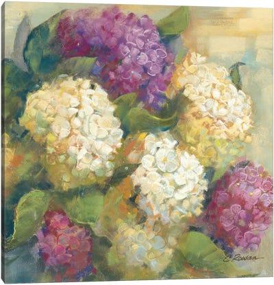 Hydrangea Delight II Canvas Art Print