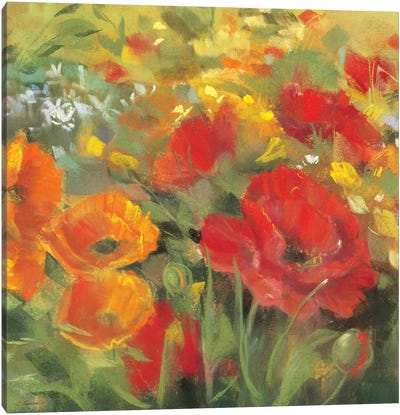 Oriental Poppy Field I Canvas Art Print