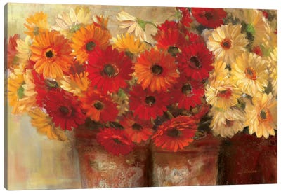 Chelsea Gerberas Canvas Print #WAC1658