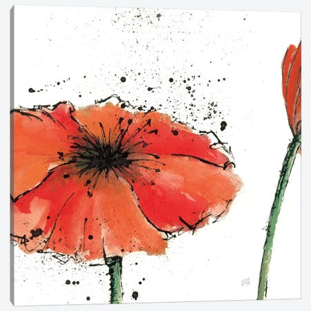 Not a California Poppy III Canvas Print #WAC1669} by Chris Paschke Art Print