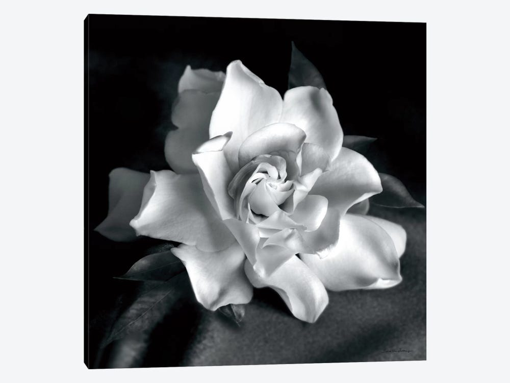Gardenia by Debra Van Swearingen 1-piece Canvas Artwork