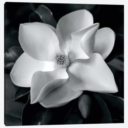 Magnolia Canvas Print #WAC1698} by Debra Van Swearingen Canvas Art