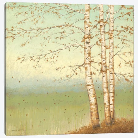 Golden Birch II with Blue Sky Canvas Print #WAC1711} by James Wiens Art Print